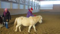 Vedenie koní2