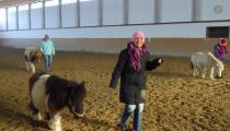 Vedenie koní3