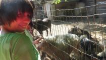 Zvierata3
